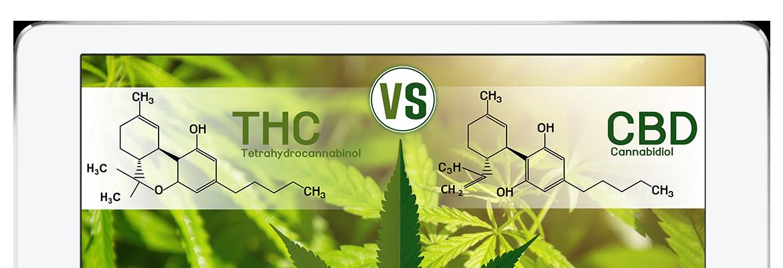 THC vs CBD Chemische Erklärung